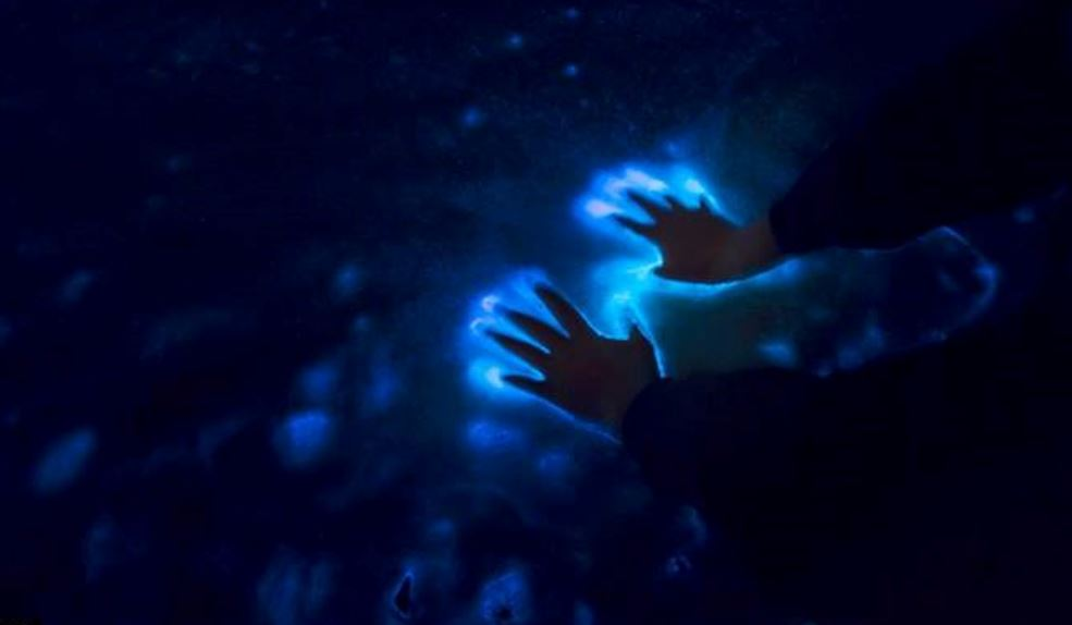 Bioluminescence for Emergency Rescue